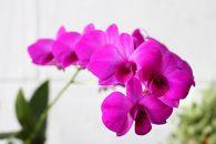 Orhideje i kako sa njima