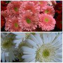 Dostava cveća za 8.mart!