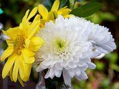 Kako odabrati cveće za godišnjicu?