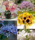 Cveće za letnje venčanje (1. deo)