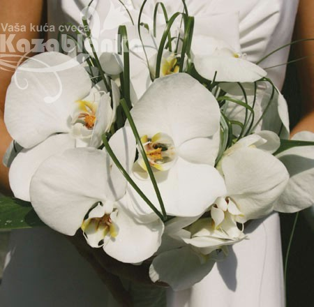 BDM 026. Bidermajer - Phalaenopsis orhideja
